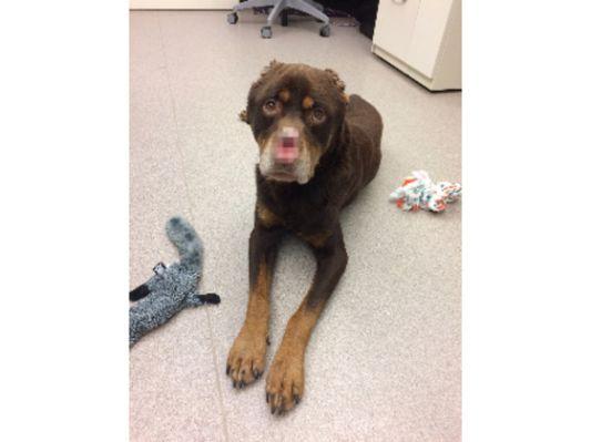 mutilated dog_1484780614730_53392755_ver1.0_640_480.jpg.cf